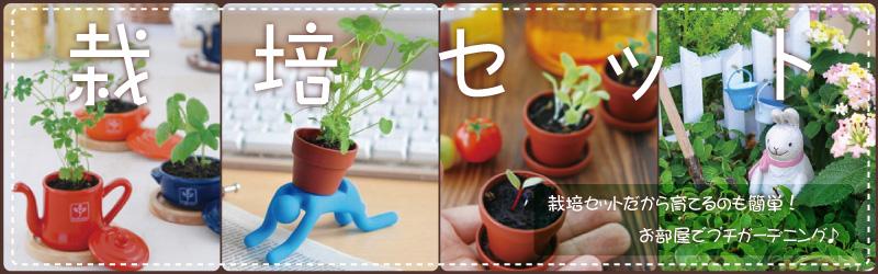 栽培セット 栽培セットだから育てるのも簡単!お部屋でプチガーデニング♪