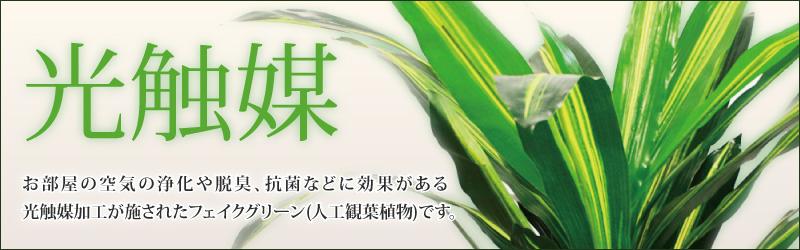 光触媒 お部屋の空気の浄化や脱臭、抗菌などに効果がある光触媒加工が施されたフェイクグリーンです