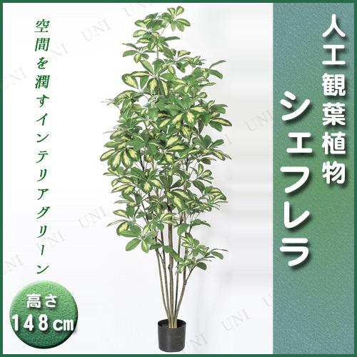【取寄品】 人工観葉植物 シェフレラポット 148cm