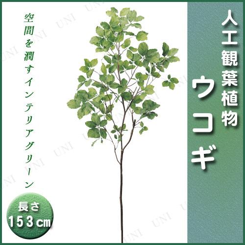 【取寄品】 人工観葉植物 ウコギ 153cm