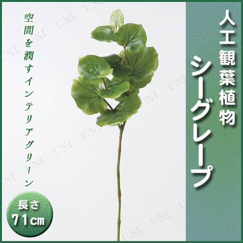 【取寄品】 人工観葉植物 シーグレープ 71cm