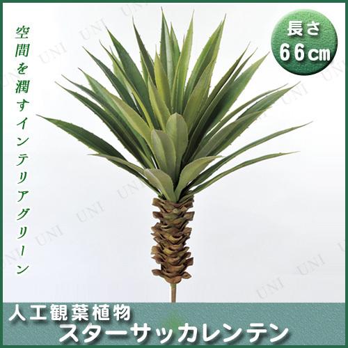 【取寄品】 人工観葉植物 スターサッカレンテン 66cm