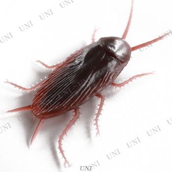 [6点セット] ゴキブリ
