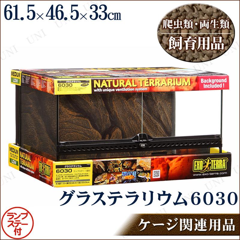 【取寄品】 爬虫類・両生類用ケージ グラステラリウム 6030